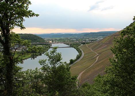 Blick auf die Schweicher Weinlage Annaberg und das Moseltal